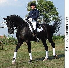 equestrian woman riding black stallion horse