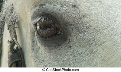 Equine Eye - White horse stares into the camera. Eyes close...