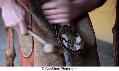 equine farrier and horse - equine farrier at work