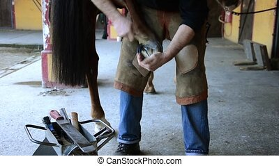 equine farrier at work