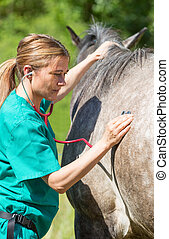 Equine veterinary - Veterinary great performing a scan to a...
