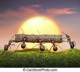 equipe, de, formigas, carregar, logue, pôr do sol, trabalho...