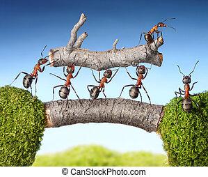 equipe, de, formigas, carregar, logue, ponte, trabalho...