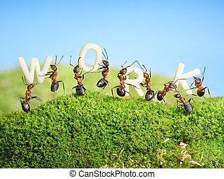 equipe, de, formigas, construir, palavra, trabalho, trabalho...
