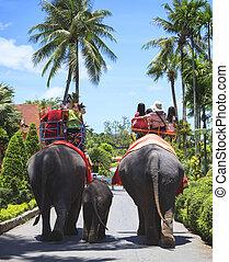 equitación, espalda, turista, elefante