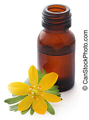 Eranthis hyemalis and medicinal extract