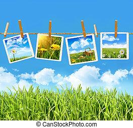 erba alta, con, quattro, immagini, su, clothesline