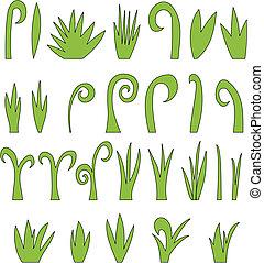 erba, collezione