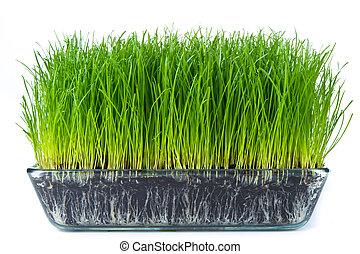 erba, con, suolo