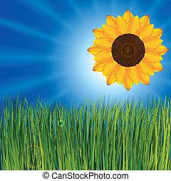 erba, e, soleggiato, cielo, con, girasole