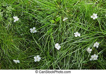 erba, fiori, bianco, fondo