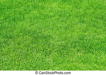 erba, fondo