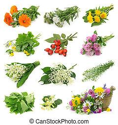erba, fresco, collezione, medicinale