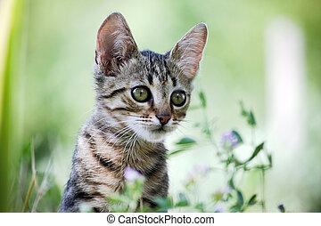 erba, giovane, gatto