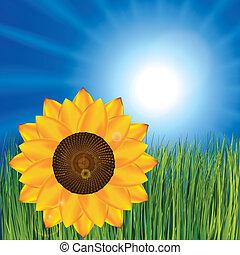 erba, girasole, e, soleggiato, cielo