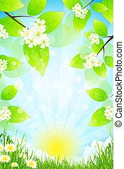 erba, paesaggio, verde