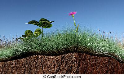 erba, sezione