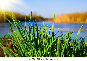 erba, soleggiato, fiume verde, giorno, banca