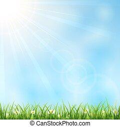 erba, soleggiato, fondo