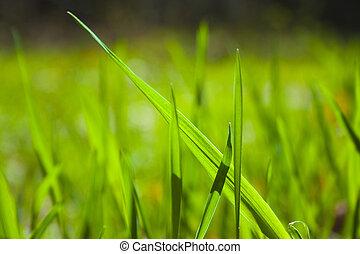 erba, struttura