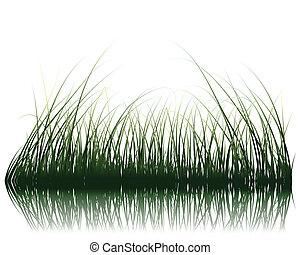 erba, su, acqua