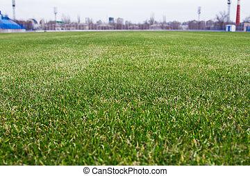 erba, su, il, campo football