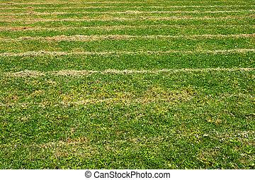 erba taglio, su, il, football, field.
