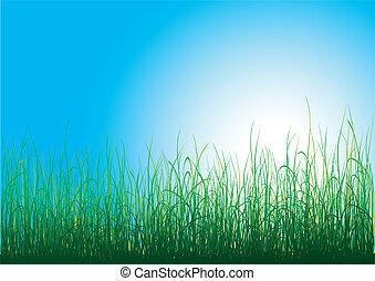 erba verde, blu, cielo