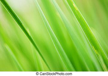 erba, verde, fondo
