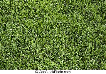 erba verde, fondo