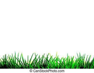 erba, verde, isolato