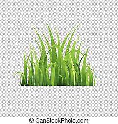 erba, verde, isolato, fondo, trasparente