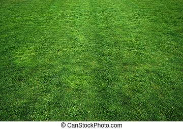 erba, verde, struttura