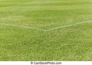 erba verde, su, il, campo football