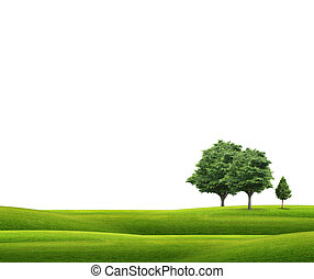erba zona, albero, verde