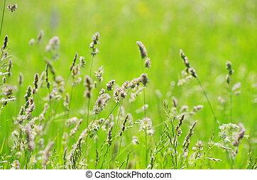 erba zona, paesaggio verde, fondo