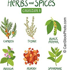 erbe, 3, spezie, collezione