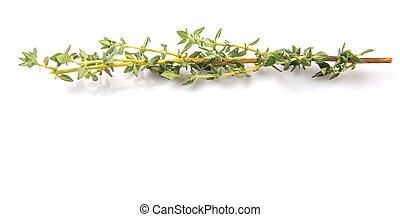 erbe, foglie, timo