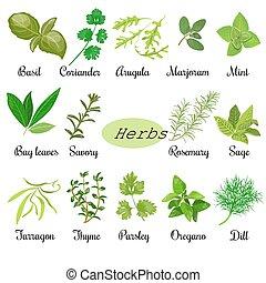 erbe, set, fresco, culinario, grande