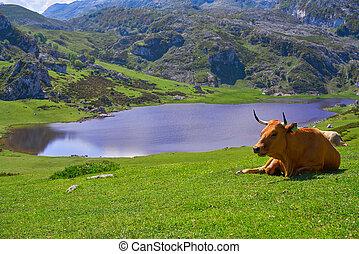 Ercina lake at Picos de Europa in Asturias Spain - Ercina...