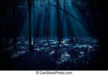 erdő, éjszaka