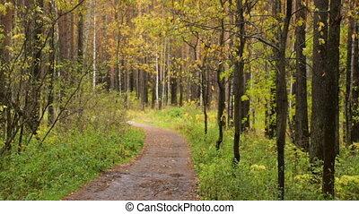 erdő, évad, ősz