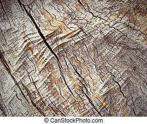 erdő, öreg, struktúra
