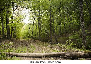 erdő, útvonal