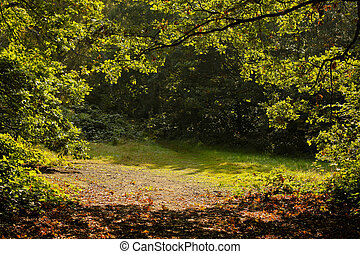 erdő, ősz, napkelte