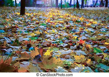 erdő, ősz parkosít