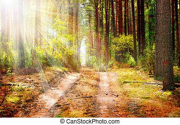erdő, ősz