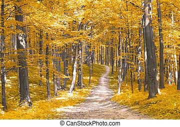 erdő, alatt, ősz