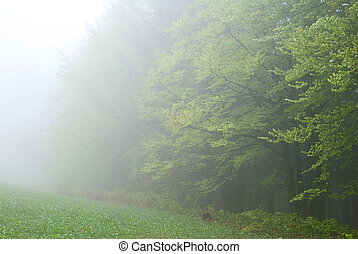 erdő, alatt, a, köd