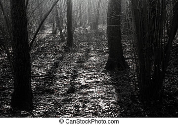 erdő, alatt, a, reggel